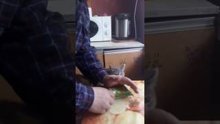 Кошка ненавидит хруст китайской лапши