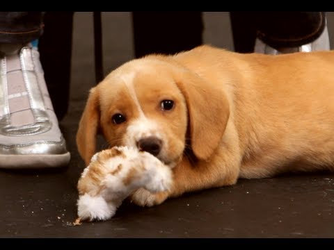 How to Deal with a Biting Puppy | Dog Training