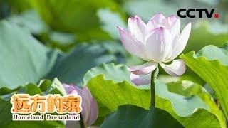 《远方的家》 20191022 长江行(53) 洪湖岸边是家乡| CCTV中文国际