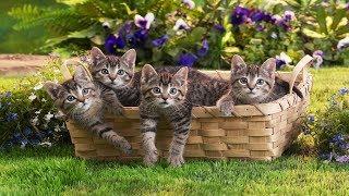 15.Прикорм для котят.