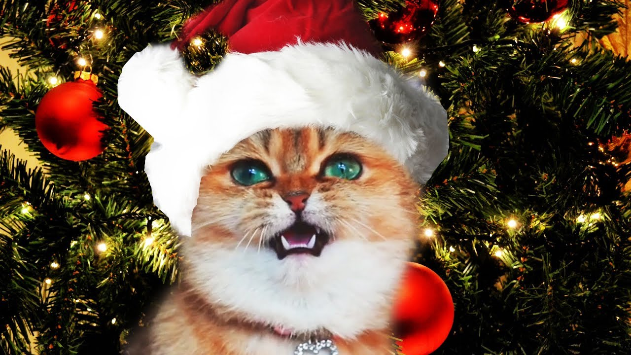 Funny Christmas Cats Sing Deck the Halls | Fa La La - Jingle Cats - Merry Christmas - YouTube