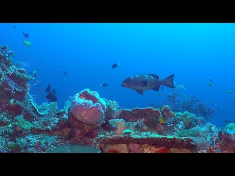 Diving the Banda Sea - From Wetar to Serua