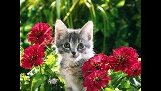 Смешные открытки с котами.