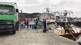 澳底港白帶魚(白魚)出貨中。2017年12月26日