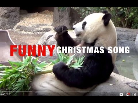 Funny Animals Sing We Wish You A Merry Christmas Youtube