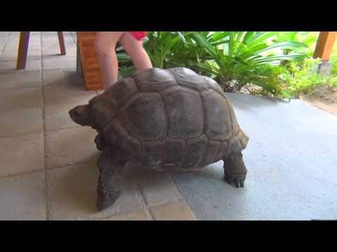 Turtles Seychelles