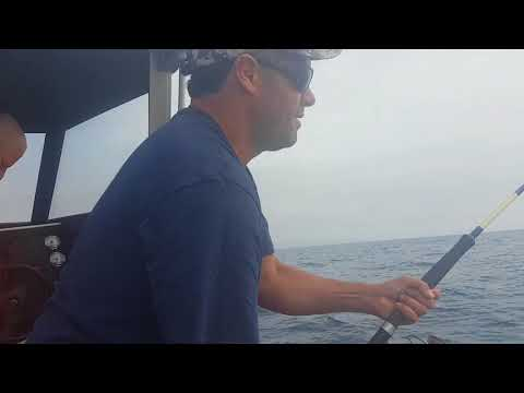 Bay Of Plenty Game Fishing. 1st Yellowfin For TSNZ, 2018.