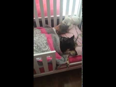 Letty B - Mom Finds Dog All Tucked in & Sleeping With Toddler in Bed  (VIDEO)