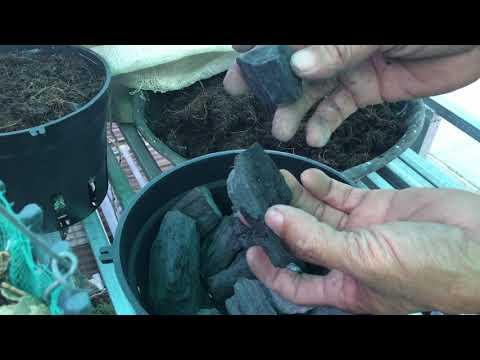 Chia sẽ làm giá thể trồng lan bằng cám dừa v than rẻ tiền . | Foci