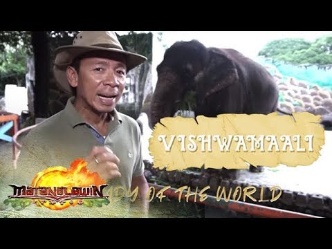 Kim Atienza features Mali, the lone elephant in the Philippines | Matanglawin