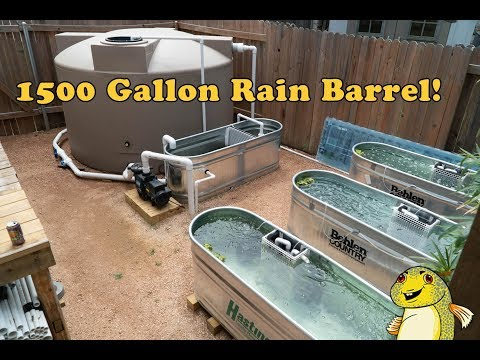 1500 Gallon Rain Barrel and Backyard Fish Breeding Project