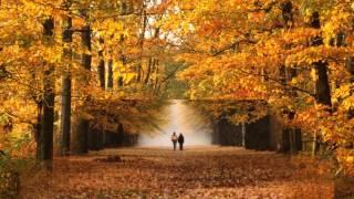 Адреналин Осень