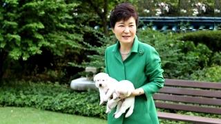 """동물단체 """"박근혜 전 대통령이 청와대에 진돗개…"""