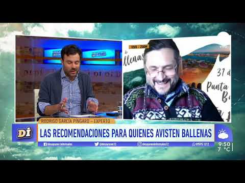 Empezó el avistamiento de ballenas en costas uruguayas: Nota en Desayunos Informales