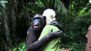 L' abbraccio commovente dello scimpanzé (bonobo) Wounda a Jane Goodall