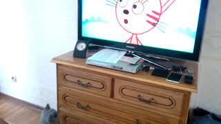 Наша кошка смотрит ТЕЛЕВИЗОР!!!