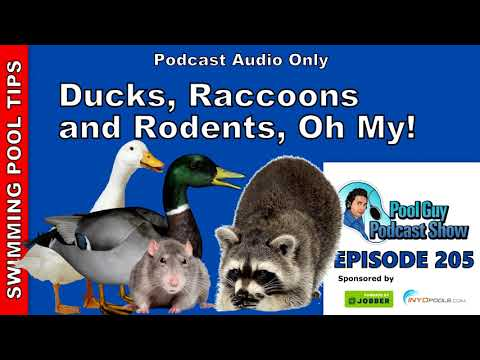 Ducks, Raccoons And Rodents, Oh My!: Tips On How To Deal With Unwanted Critters In Your Pool