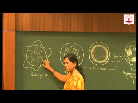 Supriya Janabandhu - Aromalous Secondary Growth In Bignonai