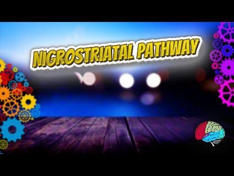 Nigrostriatal pathway - Know It ALL 🔊✅