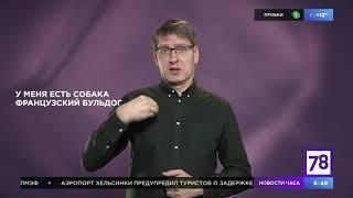 """Учим РЖЯ в """"Полезном утре"""" (Любимая собака)"""