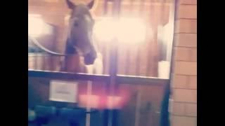 Да,да лошади умные!Моя мечта)