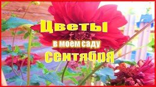 ❃❃❃Цветы сентября в моем саду  Осенние цветы. ❃❃❃