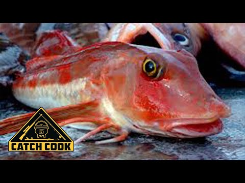 Deep water fishing for Gurnard and Hake + the ULTIMATE fish cake recipe! Mossel Bay, South Africa