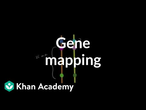 Gene mapping