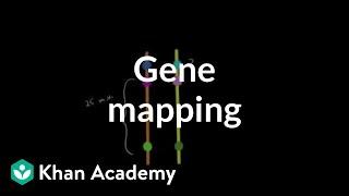 Gene mapping | Biomolecules | MCAT | Khan Academy