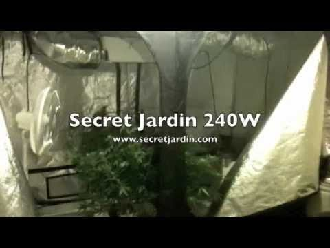 1000 Watt Legal Grow Secret Jardin 240w Grow Assistant Can Filter 22 days into flower Vid 1 - YouTube : dr150 tent - memphite.com