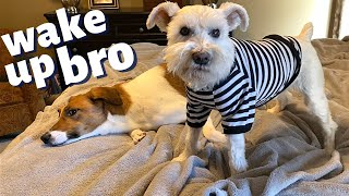 WAKE UP WITH MAXXIE + POLLUX ~ DOGS START EACH DAY WITH A SWEET MORNING ROUTINE