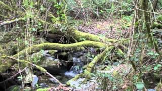Agua En la Morera