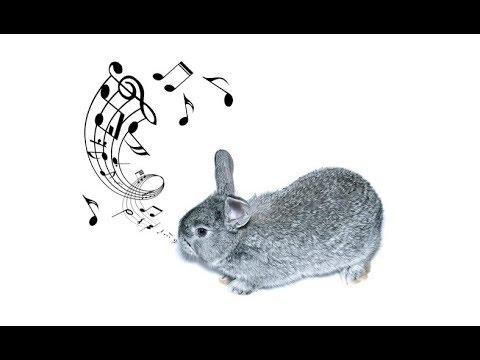 Как звучит счастливый кролик?