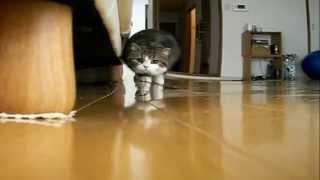 Самый Няшный Кот