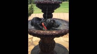 Video Ace the Fountain Dog download MP3, 3GP, MP4, WEBM, AVI, FLV Juli 2018
