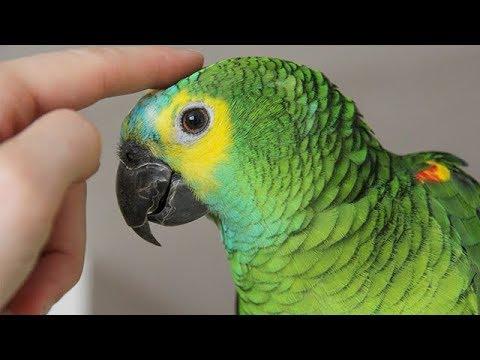 Parrots Talking –  Cute Parrot talking Funny Words Compilation