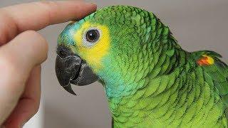 Parrots Talking -  Cute Parrot talking Funny Words Compilation