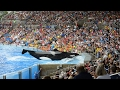 Shamu seaworld killer whale show with trainers in the water mp3