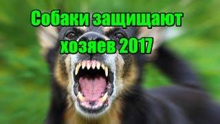 Лучшая подборка собаки защищают хозяев 2017