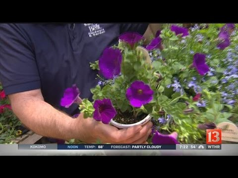 Home & Garden: Flowers to plant this spring