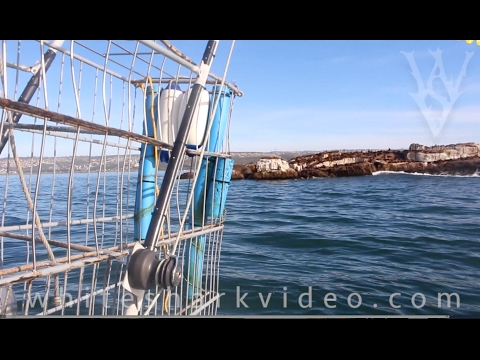 Cage Dive Desitination Guide Preview: Mossel Bay