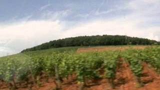 コルトンの丘を眺望する20060621 Bois de Corton