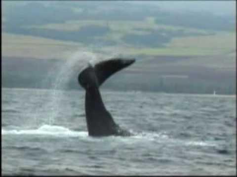 Deep Ecology Hawaii - Humpback Whales - Ken O'Keefe