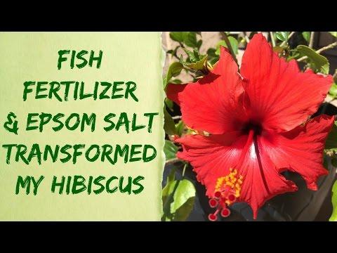 Liquid Alaska Organic Fish Fertilizer & Epsom Salt Plant Results - Organic Gardening Tips