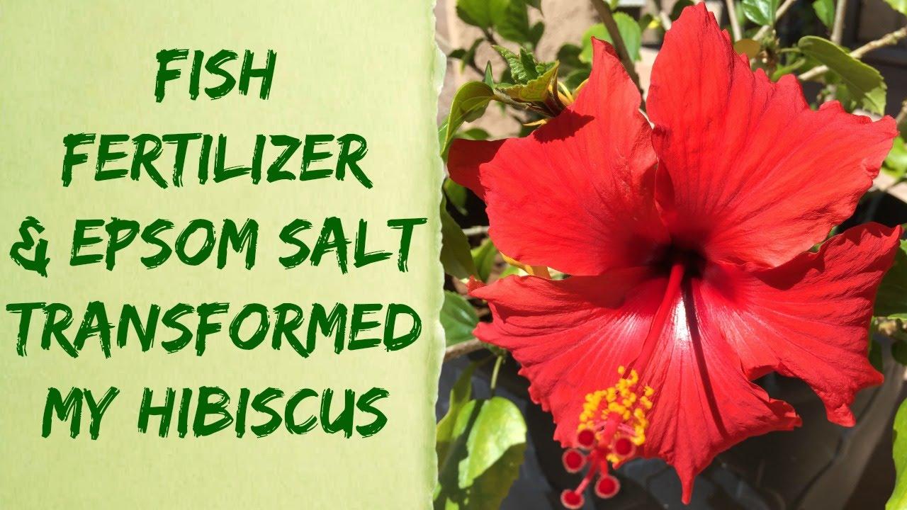 Liquid alaska organic fish fertilizer epsom salt plant for Epsom salt for fish