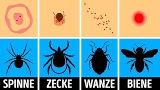 Wie man einen Insektenbiss identifiziert und richtig behandelt