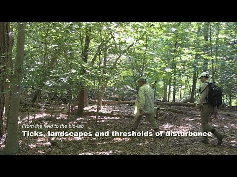 Ticks, landscapes and thresholds of disturbance