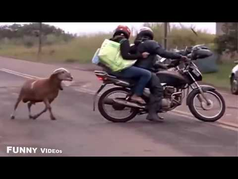 Hayvanlarin Intikami Gulmekten Oldum Yav