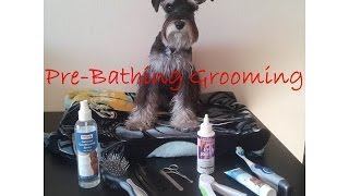 Pre-Bathing Grooming Session (of a Miniature Schnauzer)