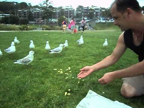 how to catch a seagull